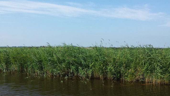Polder in Nordholland